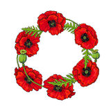 Vector red poppy flower blossom blooming template. Royalty Free Stock Photography