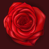 Vector red rose Royalty Free Stock Images