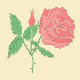 Vector red rose Stock Photos