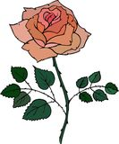 Vector red rose Stock Images