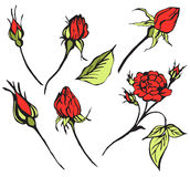 Vector red roses. Red roses on green stems vector illustration Stock Images