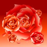 Vector red roses Stock Photos