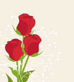 Vector red roses Royalty Free Stock Images
