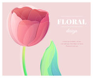 Vector red tulip flower on rose color background greeting card Stock Photography