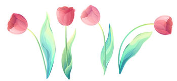 Vector red tulip flowers isolated on a white background Royalty Free Stock Photo