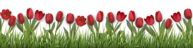 Vector red tulips and grass. Red tulips and grass. Realistic vector illustration Stock Photography