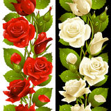 Vector red and white rose vertical seamless patter. N isolated on background