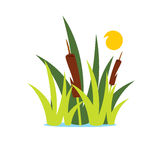 Vector Reed and Sedge Cartoon Illustration. Royalty Free Stock Photography