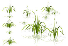 Vector  reed. Water plants in different variants with shadows. Royalty Free Stock Photo