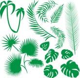 Vector reeks groene bladeren Stock Fotografie