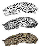 Vector of resting leopard cat Royalty Free Stock Photos
