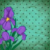 Vector retro background with iris flower Royalty Free Stock Images