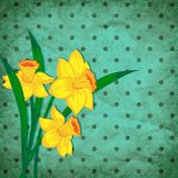 Vector retro background with narcissus Stock Images