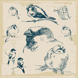 Vector retro de la colección de los gorriones Foto de archivo libre de regalías
