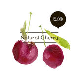 Vector ripe fresh nature cherry. Hand drawn watercolor painting cherry on white background. Vector ripe fresh nature cherry Stock Photo