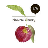 Vector ripe fresh nature cherry. Hand drawn watercolor painting cherry on white background. Vector ripe fresh nature cherry Royalty Free Stock Photo