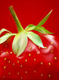 Vector ripe strawberry close-up. The vector ripe strawberry close-up on a red background Stock Images