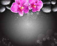 Vector romantic background with two orchids Stock Photo