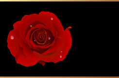 Vector. Romantic Greeting Card With Red Rose Stock Photos