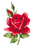 Vector rood nam met knop toe Decoratieve uitstekende bloemen Royalty-vrije Stock Afbeeldingen
