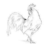 Vector Rooster black and white Stock Photo