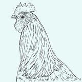 Vector rooster Royalty Free Stock Photos