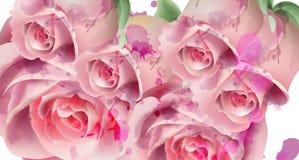 Vector rosa claro de la tarjeta de la acuarela de las rosas Tarjeta de la invitación, ceremonia de boda, postal delicada, tarjeta stock de ilustración