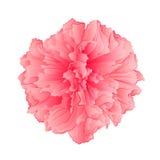 Vector rosado de la flor de Sakura de la flor Imagenes de archivo