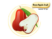 Vector Rose apple fruit isolated on color background,illustrator 10 eps Royalty Free Stock Photo