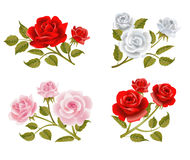 Vector rose buttonholes Royalty Free Stock Image
