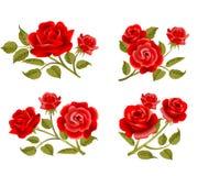 Vector rose buttonholes Stock Photo
