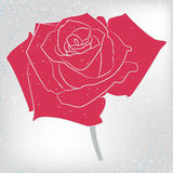 Vector rose card Royalty Free Stock Photography
