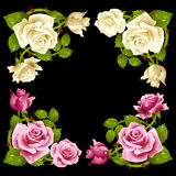 Vector rose corner isolated on black background Stock Photography