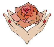 Vector rose in female hands Royalty Free Stock Photos