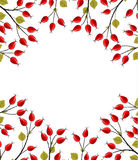 Vector rose hip. Vector Illustration of rose hip branches on a white background Stock Photo