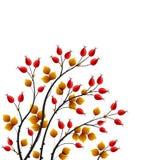 Vector rose hip. Vector illustration rose hip, colorful autumn bush Stock Photo