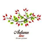 Vector rose hip. Vector illustration rose hip, colorful autumn bush Royalty Free Stock Photo