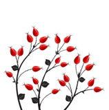 Vector rose hip. Vector illustration rose hip, silhouette autumn bush Stock Image