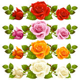 Vector rose horizontal vignette isolated on backgr Stock Photo