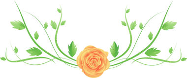 Vector rose with swirl leaves Royalty Free Stock Photography