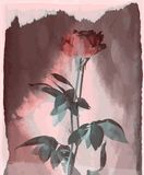 Vector rose vintage on burned wood Royalty Free Stock Photography