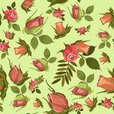 Vector roses pattern for textile or background. Stock Images
