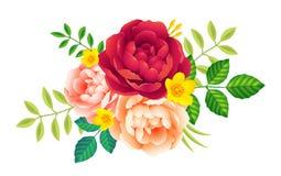 Vector a roseta das flores com peônias e esverdeie as folhas no fundo branco, decoração romântica do cartão Foto de Stock Royalty Free