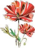 Vector rote Mohnblumen mit den Stämmen, die auf einem weißen Hintergrund lokalisiert werden stock abbildung