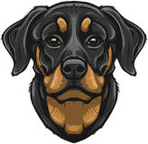 Vector Rottweiler Royalty Free Stock Photography