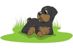 Vector rottweiler puppy. Vector illustration of a rottweiler puppy Royalty Free Stock Image