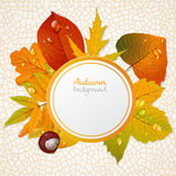 Vector round autumn leaves banner 1 Stock Photos