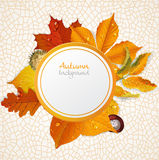 Vector round autumn leaves banner Stock Image