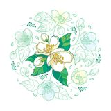 Vector round bouquet with outline Jasmine flower bunch, bud and ornate leaves in pastel green and white isolated on white. Vector round bouquet with outline vector illustration