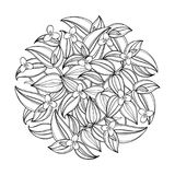 Vector round bouquet with outline Tradescantia or Wandering Jew flower. Flower and leaf in black isolated on white background. Houseplant in contour style for Royalty Free Stock Photo